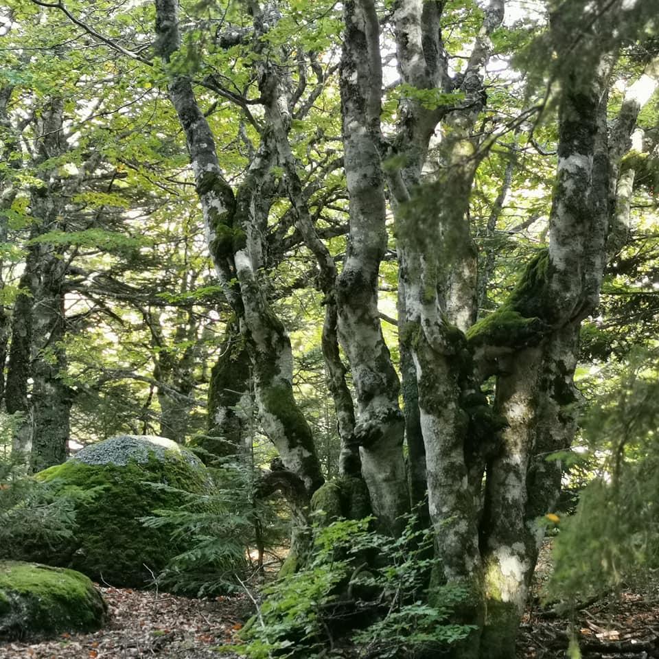 le chemin des arbres